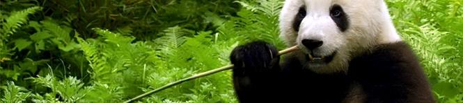 bamboo fibre blog