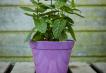 Classic Plant Pot - Purple Image