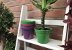 Classic Plant Pot - Green Image